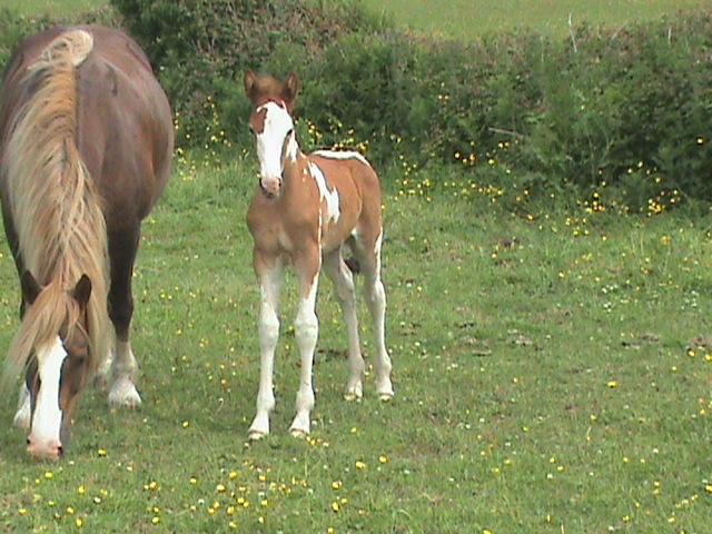 Filly foal by Airborn.
