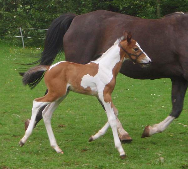 Colt foal 'Bertie' by Airborn.
