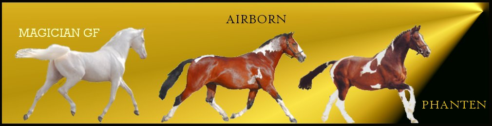 Competition Stallions from Shovern Stud